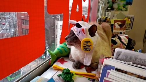 Asakusa Nekko/Cat Cafe